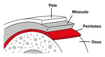 Imagem ilustrativa mostrando o periósteo da tíbia.